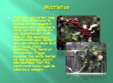 Mistletoe. Mistletoe was often hung over the entrances to homes of the pagans in Scandinavian countries to keep out evil spirits. An old Scandinavian myth tells of the seemingly invulnerable god, Balder, who was struck down by a dart made from mistletoe. The tears of this mother, Frigga, became the