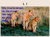 L l. Who lives in Africa? He, she or me? One lion, Two lions, Three…