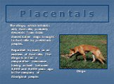 P l a c e n t a l s. The dingo, which inhabits only Australia, probably descends from Asian domesticated dogs brought to Australia by prehistoric peoples. Dingo. Regarded by many as an emblem of Australia, the dingo is in fact a comparative newcomer, having arrived between 3,000 and 8,000 years ago