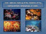 Coral reefs are made up of the skeletons of tiny marine animals called polyps, or corals.