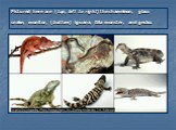 Pictured here are (top, left to right) the chameleon, glass snake, monitor, (bottom) iguana, Gila monster, and gecko.