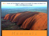 M a m m a l s. Uluru is one of the biggest rocks in the world. It measures about 2.2 miles (3.6 kilometers) long!