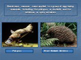 Monotreme, common name applied to a group of egg-laying mammals, including the platypus, or duckbill, and the echidnas, or spiny anteaters. Platypus Short-Beaked Echidna