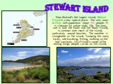 New Zealand's 3rd largest island, Stewart Island is a very special place. The only town is Oban with population about 400 people. It is a heaven for native birds' life. The kiwi, rare in both the North and the South Island, is common over much of the island, particularly around beaches. The weather
