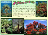 New Zealand is one of the world's richest bio-diverse flora areas on earth. It is endemic and its extent is enormous. Native trees include Rimu, Totara, Matai, Kahikatea, Rata, Tawa and many species of ferns including some giant tree ferns. Other notable trees include the Cabbage Tree, the Nikau Pal