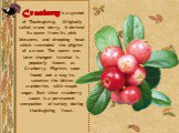 Cranberry is a symbol of Thanksgiving. Originally called crane berry, it derived its name from its pink blossoms and drooping head which reminded the pilgrim of a crane. The name was later changed to what is popularly known as Cranberry. Pilgrims soon found out a way to sweeten the bitten cranberrie