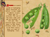 Beans are a special symbol of thanksgiving. Native Americans are believed to have taught the pilgrims to grow beans next to cornstalks. This was so that beans could grow and use cornstalks as their pole. Thus American beans are also known as 'Pole Beans'. Famously known as one of the 'Three sisters'