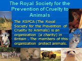 The Royal Society for the Prevention of Cruelty to Animals. The RSPCA (The Royal Society for the Prevention of Cruelty to Animals) is an organization (a charity) in Britain . The members of this organization protect animals.