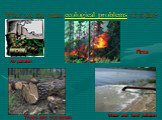 What are the main ecological problems of today? Air pollution Water and land pollution Fires Trees are cut down