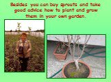 Besides you can buy sprouts and take good advice how to plant and grow them in your own garden.