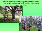 An old tradition is the English farmers choose the oldest apple-tree sing ballads and dance round the tree.