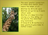 """The word """"giraffe"""" comes from an arabic word 'zirafah' which means """"the tallest of all"""". Giraffes live 20 to 30 years Giraffes can go for up 2 weeks without water Giraffes only sleep for a few minutes at a time. Sitting on the ground, they bend their long necks down It takes 14 to 15 months for a ba"""