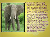 The elephant is the largest animal that lives on land. Elephants have larger ears than any other animal and their tusks are the largest teeth. An elephant` s nose is called a trunk. A lot of things can be done with the help of a trunk. An elephant is a nice animal, strong and friendly. It leaves gra