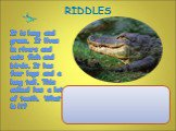 It is long and green. It lives in rivers and eats fish and birds. It has four legs and a long tail. This animal has a lot of teeth. What is it? RIDDLES
