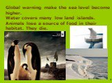 Global warning make the sea level become higher. Water covers many low land islands. Animals lose a source of food in their habitat. They die.