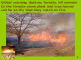 Global warning destroy forests, kill animals . In the forests some plant and tree leaves can be so dry that they catch on fire.