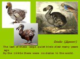 Dodo (Дронт). The last of these large quiet birds died many years ago By the 1690s there were no dodos in the world.