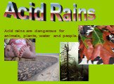 Acid Rains. Acid rains are dangerous for animals, plants, water and people.