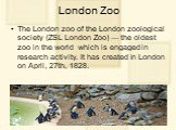 London Zoo. The London zoo of the London zoological society (ZSL London Zoo) — the oldest zoo in the world which is engaged in research activity. It has created in London on April, 27th, 1828. It is located in northern part of Regent's Park (Regent's Canal proceeds through it)