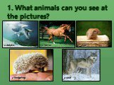 1. What animals can you see at the pictures? a dolphin a hedgehog a rabbit a horse a wolf