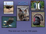 This bird can live for 100 years.