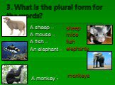 3. What is the plural form for the words? A sheep – A mouse – A fish – An elephant – A monkey -. sheep mice fish elephants monkeys
