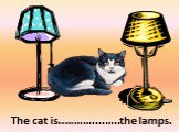between. The cat is..………....…..the lamps.