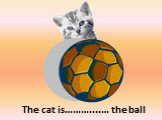 behind. The cat is………....… the ball