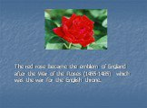 The red rose became the emblem of England after the War of the Roses (1455-1485) which was the war for the English throne.