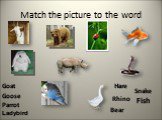 Match the picture to the word Goat Bear Fish Goose Hare Rhino Parrot Snake Ladybird