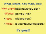 What, where, how many, how . . . pets have you got? . . . do you live? . . . old are you? . . . is your favourite sport? What Where How many How It's great!!!