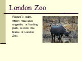 London Zoo. Regent's park, which was also originally a hunting park, is now the home of London Zoo.