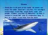 Sharks. Sharks live in all parts of the world. All sharks eat meat. The white shark isn't very nice. It is very big-6 meters long! It eats fish, small sharks, seals and people. It swims very fast- 65 kilometers an hour. A remora is a small fish- only 45 centimeters long. It lives on a shark. It eats