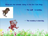 What are the animals doing in the Zoo ?(be Ving). The wolf is running. The monkey is dancing.