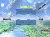 Animals Domestic Wild classification of animals Classes of animals beast of pray herbivores
