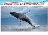 THANK YOU FOR ATTENTION!!!!