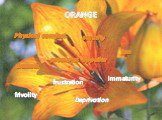 ORANGE Deprivation frustration frivolity immaturity Physical comfort promotes appetite warmth security fun