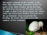 The native animals in the country is the kiwi. This interesting bird lives in the wet parts of the thick bushes. In the day-time the bird does not go out. It comes out only at night to find food. Kiwis cannot fly. Many years ago kiwis were hunted for food. Now the government does not permit the hunt