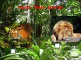 Name these animals a lion a tiger
