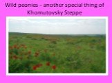 Wild peonies - another special thing of Khomutovsky Steppe