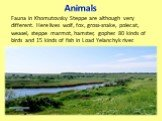 Animals. Fauna in Khomutovsky Steppe are although very different. Here lives wolf, fox, gross-snake, polecat, weasel, steppe marmot, hamster, gopher. 80 kinds of birds and 15 kinds of fish in Load Yelanchyk river.