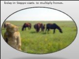 Today in Steppe starts to multiply horses.