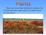 Plants. There are more then 560 kind of plants. 50 of them are very scarce and 15 of them are in the Red Book.