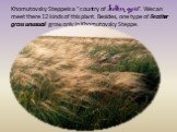 """Khomutovsky Steppe is a """"country of Feather grass"""". We can meet there 12 kinds of this plant. Besides, one type of Feather grass unusual grow only in Khomutovsky Steppe."""