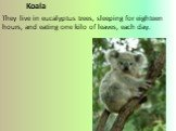 Koala They live in eucalyptus trees, sleeping for eighteen hours, and eating one kilo of leaves, each day.