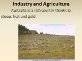 Industry and Agriculture Australia is a rich country thanks to sheep, fruit and gold