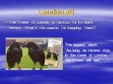 """London 30. The Tower of London is famous for its black ravens. What's the reason for keeping them? The legend says: """"As long as ravens stay in the tower of London, the Crown will last""""."""