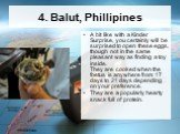 4. Balut, Phillipines. A bit like with a Kinder Surprise, you certainly will be surprised to open these eggs, though not in the same pleasant way as finding a toy inside. They are cooked when the foetus is anywhere from 17 days to 21 days depending on your preference. They are a popularly hearty sna