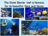 The Great Barrier reef is famous for its beautiful flora and fauna