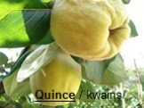 Quince /ˈkwains/